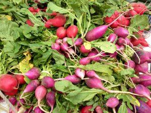 OFM multi color radishes