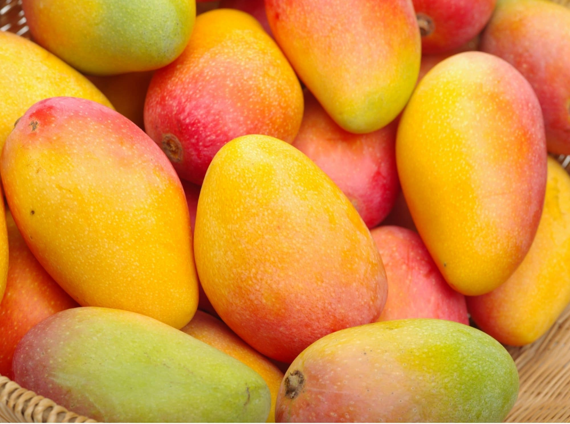 pile of colorful mangoes