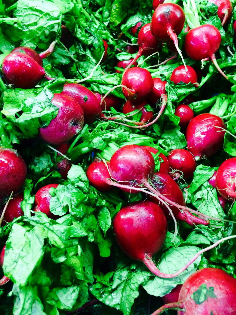 radishes with greens attached