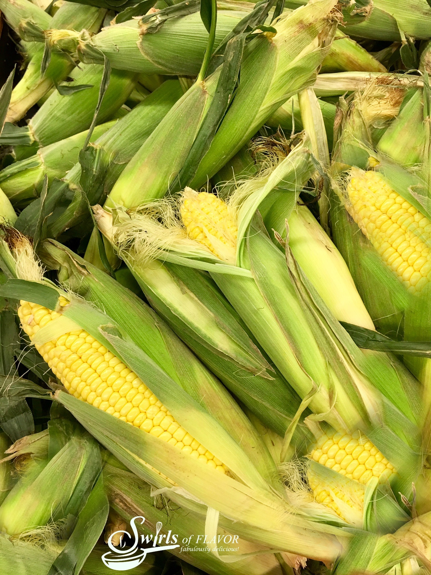 pile of corn on the cob in husks